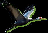 pct_crane[1]